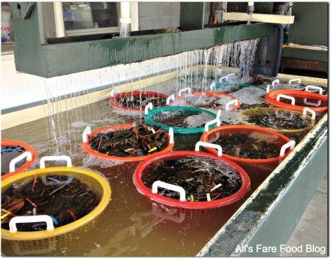 Lobsters taking a swim